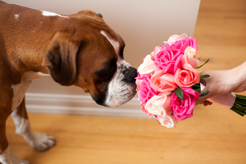 pale pink, hot pink, coral roses and a boxer dog