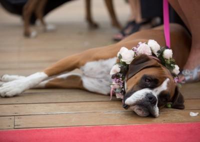Boxer Dog Flower Girls