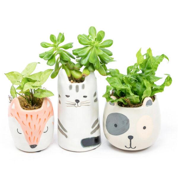 Face Pot from Kilsyth Florist, best flower shop