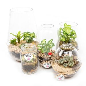 Terrarium from Kilsyth Florist, best flower shop