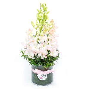 Orchid Vase from Kilsyth Florist, best flower shop