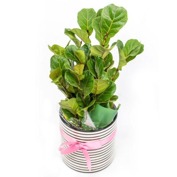 plant from Kilsyth Florist, best florist near me