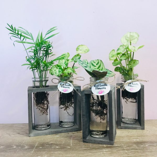 Plants in jars by Red Earth Flowers